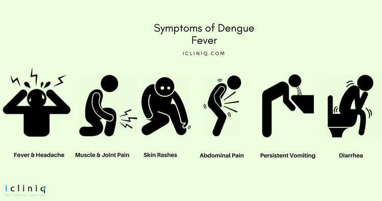 Image: Dengue Fever: Common Questions Answered